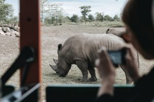 Why Selecting A Private Safari In Tanzania Is An Excellent Choice